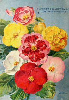 1915 - Miss Ella V. Baines the woman florist Springfield, Ohio : - Biodiversity Heritage Library. #BHLinbloom