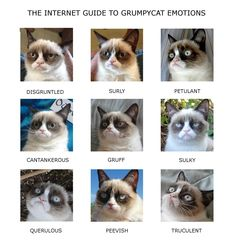 tard the grumpy cat pictures | Grumpy Cat Emotion-Chart ← Gilly's playground