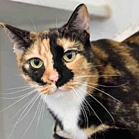 Austin Tx Domestic Mediumhair Meet Flora A Cat For Adoption Cat Adoption Cool Pets Pets