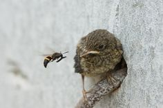 Hank the Hornet is proud to announce the opening of The Early Bird, a worm delivery service.