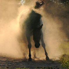 "Ahhhh... the big ""shake"" after a good roll in the dust!"