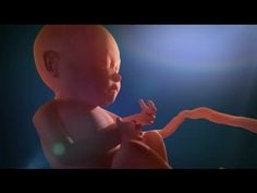 Baby Growth from 0 to 9 Months - Inside Pregnancy - YouTube