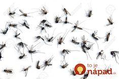 Bič na nenávidené komáre: Stačí urobiť toto a vyhnú sa vám oblúkom aj vonku + rada nad zlatom na celú sezónu! Russian Recipes, Polish, Tips, Vitreous Enamel, Nail, Nail Polish, Counseling, Nail Polish Colors