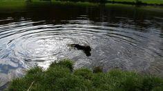 Guido lekker even zwemmen.