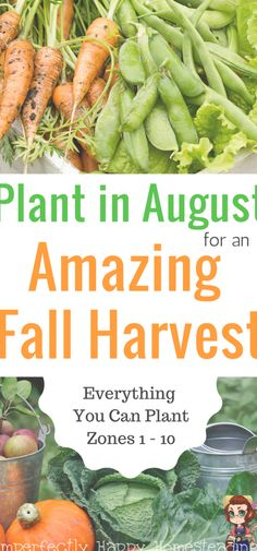 Everything You Can Plant in August for an Amazing Fall Harvest from Your Vegetable Garden. Zone 1, 2, 3, 4, 5, 6, 7, 8, 9 and 10 included