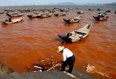 ... eutrophication&hypoxia Red tide in Xiamen, China   by eutrophication&hypoxia