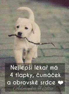 Pes ti dá do tváří ůsměv vždy když je nejhůř😢❤❤💘💘 Words Can Hurt, Cool Words, Dog Quotes Love, Best Quotes, I Love Dogs, Puppy Love, Cute Pupies, Just Smile, English Words