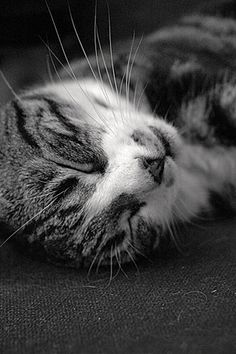 how can you not love cats when they look so cute while sleeping