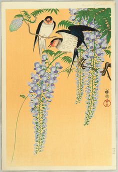 Ohara Koson: Swallows and Wisteria   1926