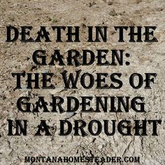 Death in the Garden and the Woes of Gardening in a Drought.  Find out what we're doing to help our gardens survive! Montana Homesteader