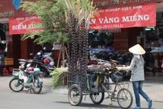 Sugar cane is a huge grass. Along with sugar beet it is the main plant for sugar production. Sugar Beet, Travel Info, Beets, Street Food, Documentary, Food Food, Food Videos, Vietnam, Juice