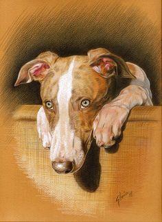 Portraits animaliers à l'aquarelle ou aux pastels, peintures, croquis - Pastels…