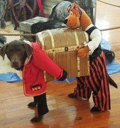 101 mascotas   disfraces para perros: 10 excelentes disfraces para perro
