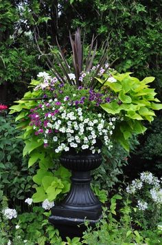 Traditional Garden Urns and Contemporary Containers Love, love, love these! Traditional Garden Urns and Contemporary Containers :: Hometalk Container Flowers, Container Plants, Container Gardening, Succulent Containers, Garden Urns, Garden Planters, Flowers For Planters, Potato Vine Planters, Planters For Front Porch
