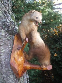 Lovely French vintage taxidermy French Fouine/Mink