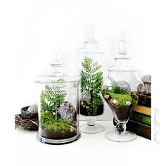 Hey, I found this really awesome Etsy listing at https://www.etsy.com/listing/88387130/terrarium-set-3-large-decorative