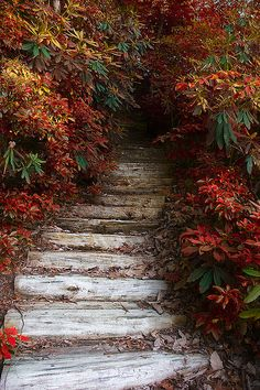 ✯ On the Way Down..sometimes stepping into the unknown is like stepping into a mysterious and unknown forest...you may encounter things you like and things you don't like...and it is accepting the beauty in all that we find balance and self acceptance.