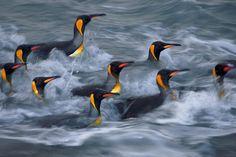 Paul Nicklen. Great photo!