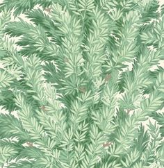 Florencecourt (100/1002) - Cole & Son Wallpapers - Inspired by an original block print design, Florencecourt takes its name from the Florencecourt Yew, one of the original Yew trees within the British Isles. The combination of surface and flexographic print techniques adds a contemporary feel to the dense foliage of the design. Shown here in viridian. Other colourways are available. Please request a sample for a true colour match.
