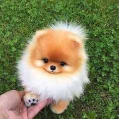 Any dogs and puppies that are cute. See more ideas about Cute Dogs, Cute puppies Tags: Baby Animals Super Cute, Cute Little Animals, Cute Funny Animals, Funny Dogs, Cute Cats, Funny Puppies, Cutest Animals, Funny Images Of Animals, Funny Husky
