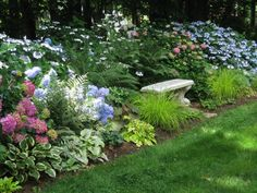 This photo shows the garden up close and that the path leads to the hydrangea bed and bench. There are two rows of hydrangeas and shade perennials in front.