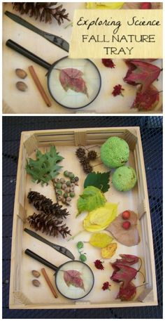 {Autumn Nature Tray} Explore seasonal changes with this outdoor hands-on sensory activity. Collect natural items for a great nature & STEM activity!