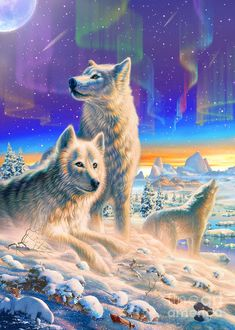 Arctic Wolves by Adrian Chesterman