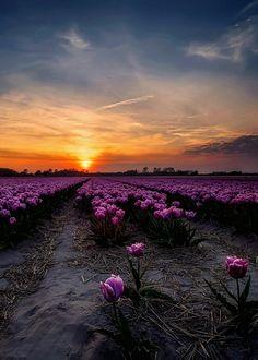 Mind Over Matter, Green Nature, Lavender Fields, Most Visited, Mountains, Sunset, World, Plants, Optimism