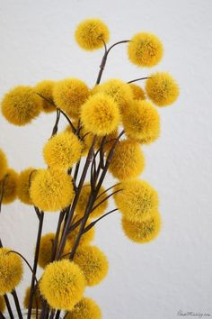 mustard yellow fuzz blossoms for fall decor gelb Neutral fall deco. - mustard yellow fuzz blossoms for fall decor gelb Neutral fall decor ideas - Marvel Canvas Art, Abstract Canvas Art, Flower Yellow, Grey Flowers, Flowers Nature, Beautiful Flowers, Flower Canvas, Flower Art, Wallpaper Tumblrs