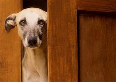 Expressive Dog Portraits by Elke Vogelsang | Inspiration Grid | Design Inspiration