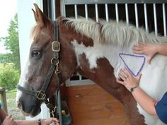 How to give your horse intermuscular injections     http://www.gvequine.com/Pages/ht_GIVE_INTRA-MUSCULAR_INJECTIONS.php