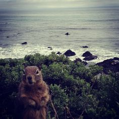 "Squirrel on vacation-""Wouldn't you know the week I pick for vacation the weather would be lousy"".  VTP"