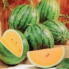 New Queen Watermelon