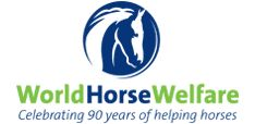 World Horse Welfare | We are an international horse charity that improves the lives of horses in the UK and around the world through education, campaigning, and hands-on care.