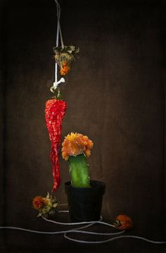 Still Life With Cactus   Flickr - Photo Sharing!