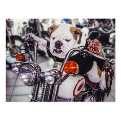 Motorcycle Gifts, Motorcycle Shop, Cool Bikes, Postcard Size, Party Hats, Wall Sticker, Paper Texture, Harley Davidson