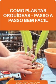 Como Plantar Orquídeas – Passo a Passo Bem Fácil → Como Plantar Orquídeas Em Casa de Um Jeito Bem Simples! Você Pode Ter Essa Linda Flor em Casa e Até Mesmo Plantar Orquídeas para Vender. Basta Seguir Esse Passo a Passo #orquídeas #plantar #vaso #casa #jardinagem #flor Agaves, Indoor Garden, Bonsai, Planters, Sweet Home, Fruit, Flowers, Emoticon, Flower Gardening