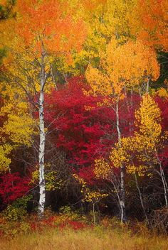 Red and Gold Autumn Scenes, Fall Pictures, Belle Photo, Fall Halloween, Haunted Halloween, Beautiful World, Beautiful Landscapes, Autumn Leaves, Winter Trees