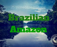 25 Incredible Images of the Brazilian Amazon | 25 moments of awe we captured on Cristalino Lodge's private reserve, 28,167 acres of Brazilian Amazon set aside to conserve Brazil's biological diversity.