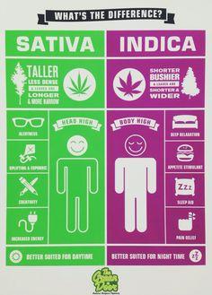 #sativa #indica #educate