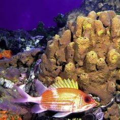 1809 best Peces de acuarios (Acuarium Fish) images on ...