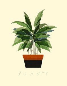-planta