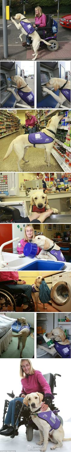 Why we love service dogs...