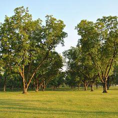 Jay z blueprint 3 free download zip jay podiatry and zip pecan tree collection root stocks set of 3 malvernweather Gallery