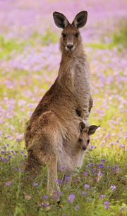 Kangaroo Mom with Baby