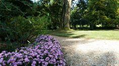 Garden at MDM