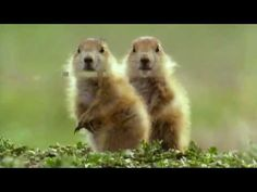 Funny Talking Animals - Walk on the Wild Side - Series 2, Episode 4, Preview - BBC One - YouTube
