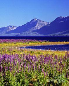 Spring - Lake Tahoe