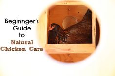 Natural Chicken Care - A Beginner's Guide :: Five Little Homesteaders