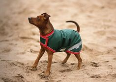 Rambo Dog Blankets